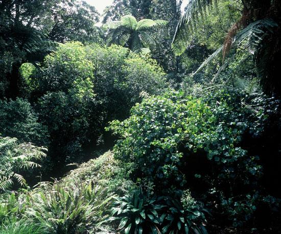 Te Kainga Marire New Zealand S Native Garden Photo Galley
