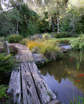 New zealand plants on pinterest new zealand native for Landscape design christchurch nz
